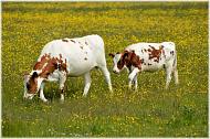 Граждане, ведущие личное подсобное хозяйство, смогут получить субсидию на возмещение части затрат за приобретенное поголовье сельскохозяйственных животных