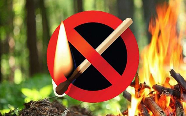 Ответственность за нарушение правил пожарной безопасности в лесах.