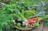 Внимание гражданам, ведущим  садоводство и огородничество!