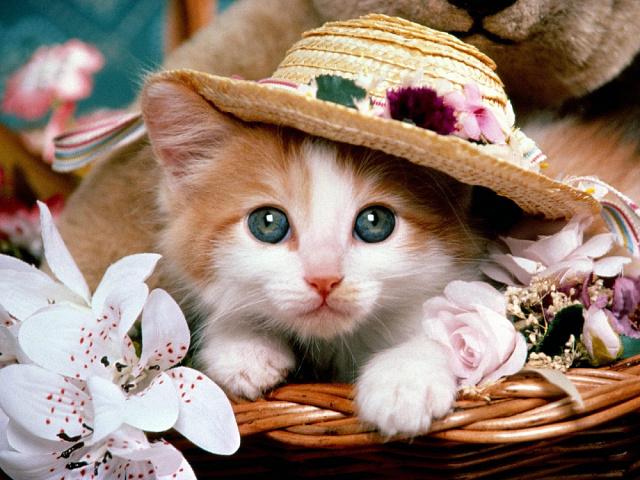 КОНКУРС! Кошки - символ домашнего очага